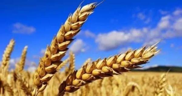关注深化农垦改革:9