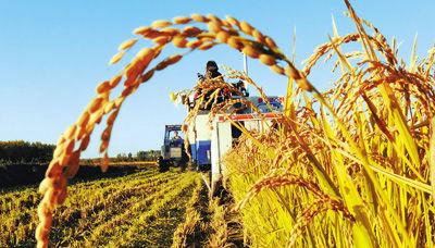 """推动农业绿色转变:""""十三五""""推动农业转型势在必行"""