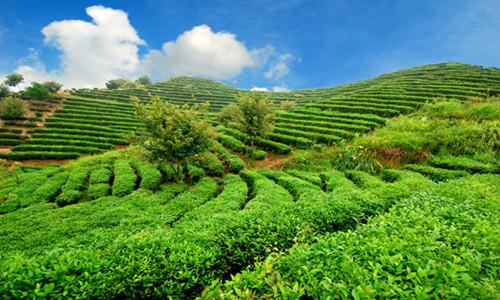 推动农业绿色转变:环境治理  提升农业可持续发展水平