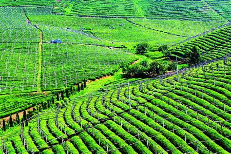聚焦中央农村工作会议:中央农村工作会议在京召开
