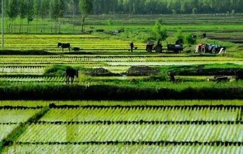 中农办:十三五农业农村需投3.4万亿 已落实约三分之一