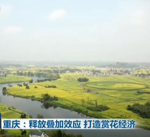 重庆:释放叠加效应  打造赏花经济
