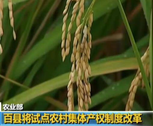 农业部:百县将试点农村集体产权制度改革