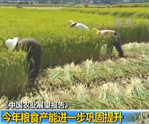 《中国农业展望报告》:今年粮食产能进一步巩固提升