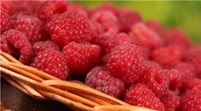 新场村 红树莓为山村注入发展活力