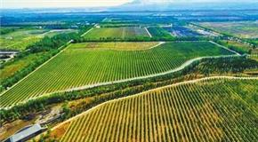 贺兰山东麓:种植酿酒葡萄的黄金地