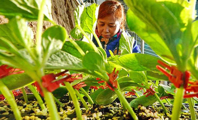 河北乐亭:壮大蔬菜产业 加快乡村振兴