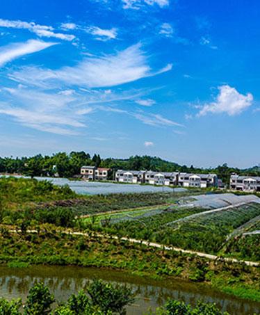 抓牢乡村振兴着力点 加快农业转型升级