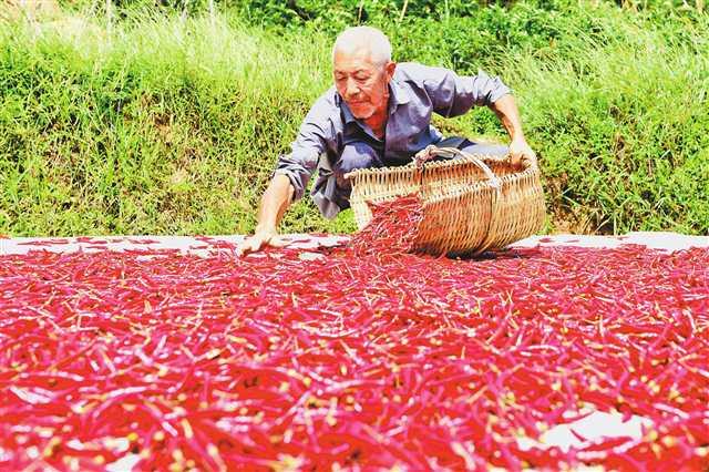 綦江 三产融合助农业高质量发展提速