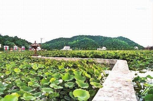 乌兰:探索乡村振兴湖南路径建设湖湘特色美丽乡村