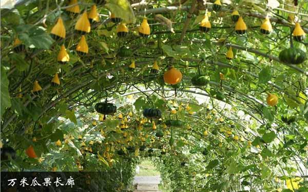 武隆区农业综合开发项目风采