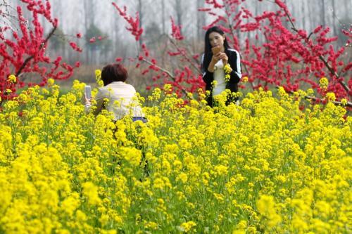 """""""春游经济""""花开遍地 乘着高铁去踏青"""