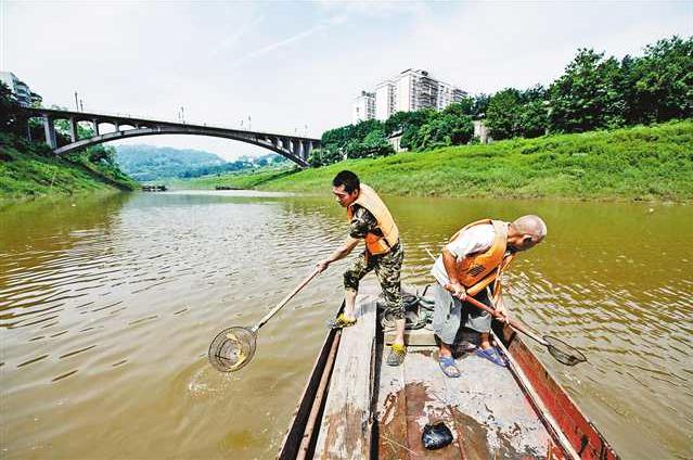 中央生态环保督察重庆在行动|巴南:让五布河清清亮亮入长江