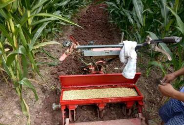 重庆丘陵山地玉米带状套作大豆实现全程机械化
