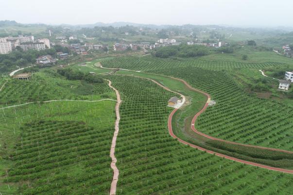 忠县滚动推进农田项目高质量发展