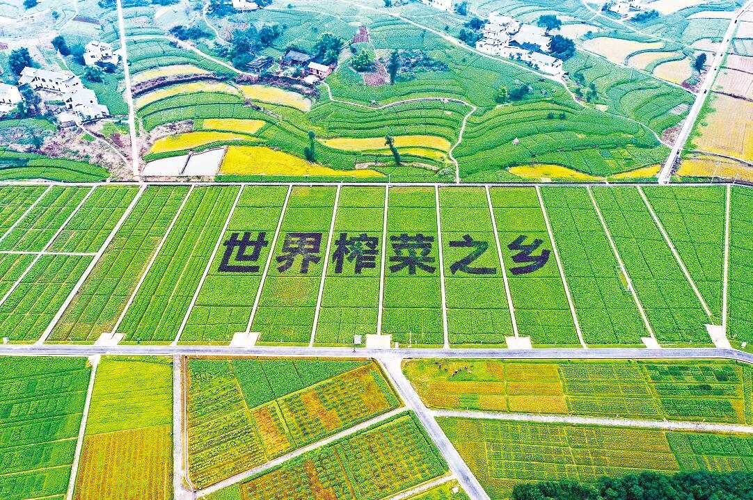 重庆涪陵:以特色产业发展绘就乡村振兴魅力新画卷