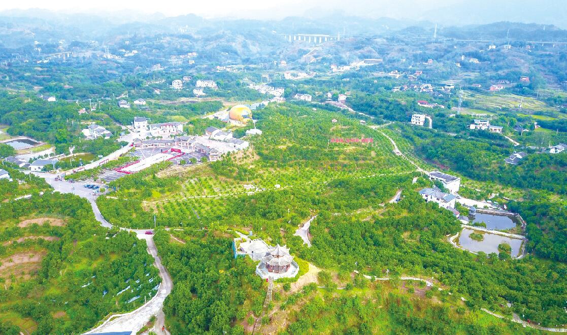 高质量发展特色水果产业的实践与建议