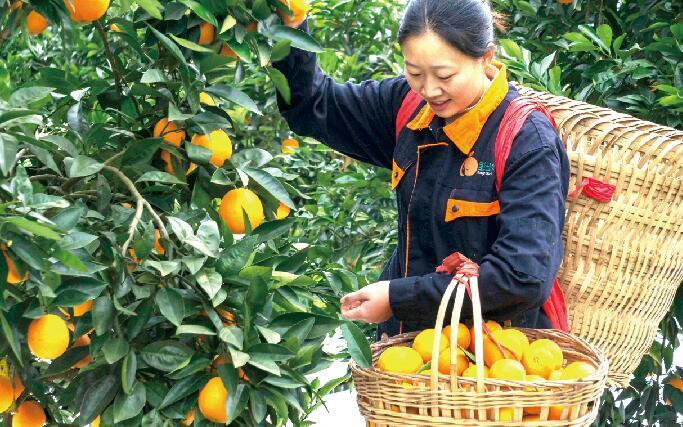 """""""橙纽妞""""品牌成长记:爱农业就像爱自己的女儿"""