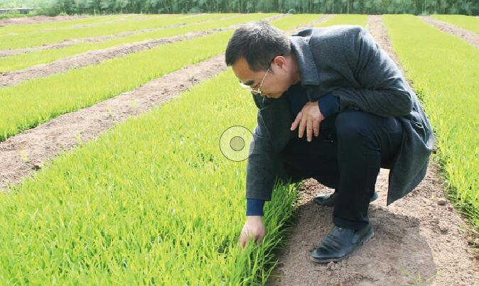 一颗稻谷撬动产业转型