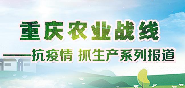重庆农业战线——抗疫情 抓生产
